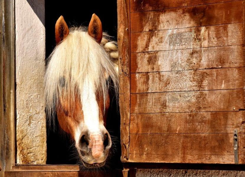 Lesiones por el caballo