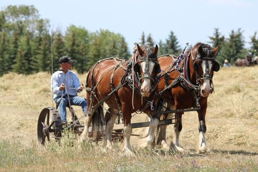 razas de caballos de tiro