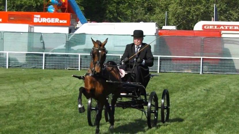 Pony Hackney