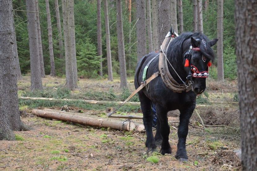 trabajo forestal caballo