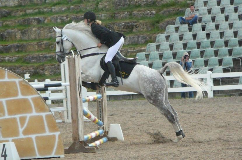 mejor raza de caballos